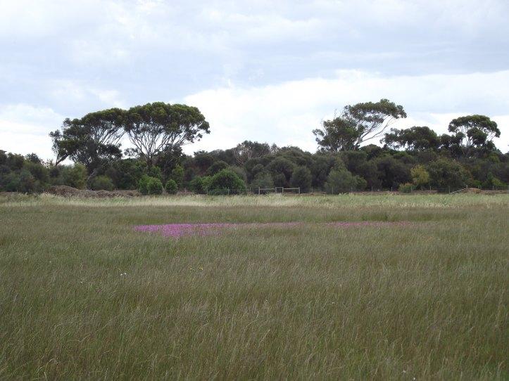 Grassland at Altona Coastal Park