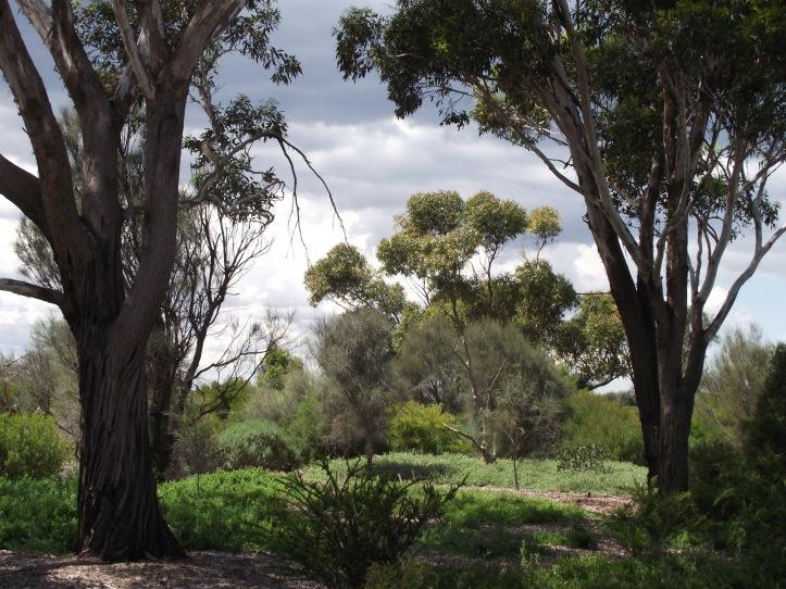 Woodland at Altona Coastal Park